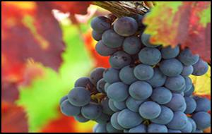 vineyards-breweries